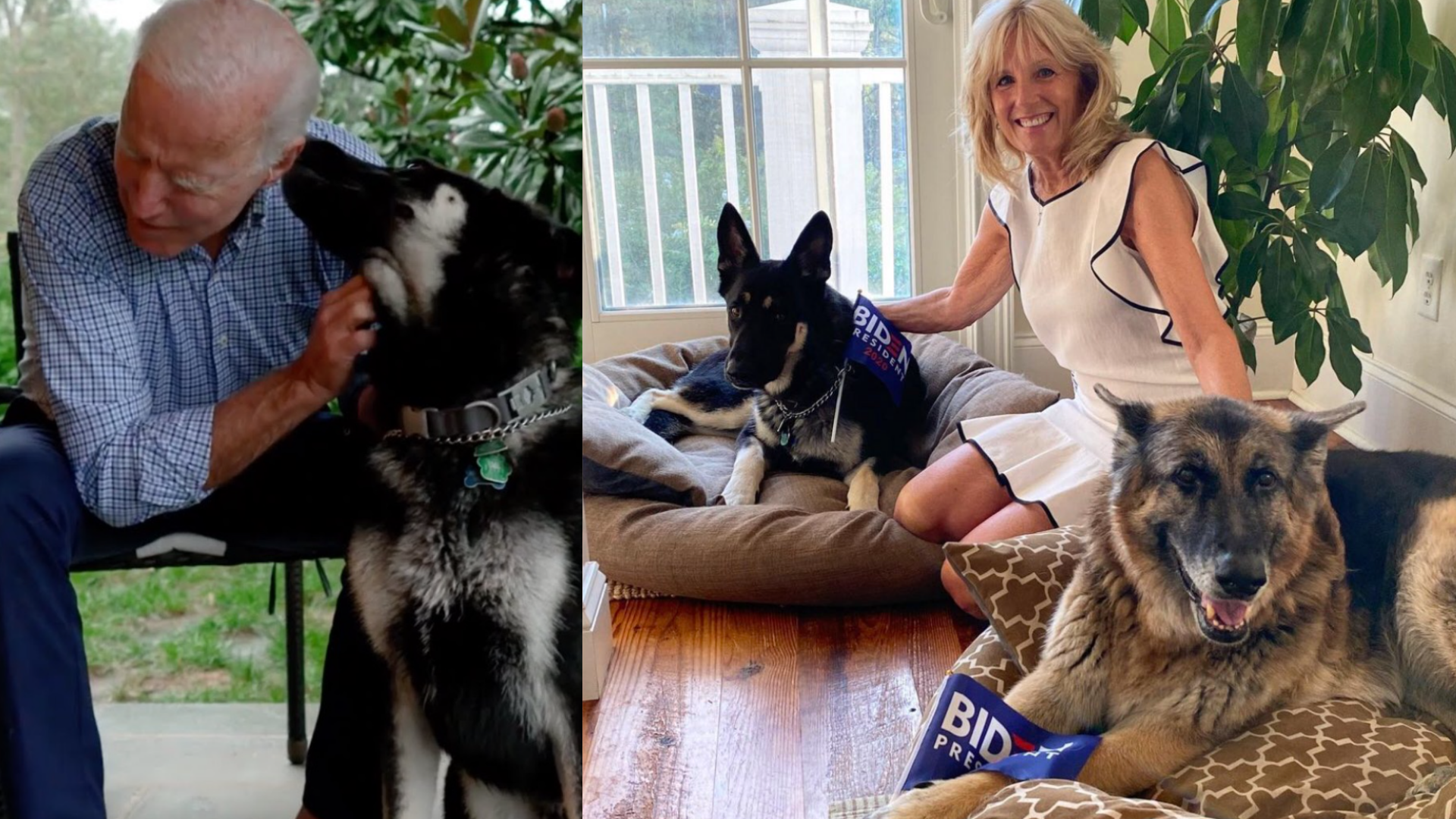 Biden's Dogs Take Internet by Storm